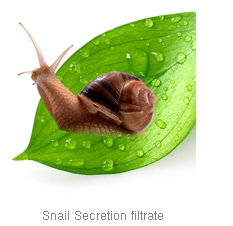 Snail Secretion Filtrate